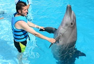 Swim with the Dolphins at Atlantis the Palm in Dubai Image