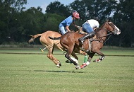 Enjoy a Polo Experience in Dubai Image