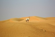 Spend a Day at Dubai Desert Conservation Reserve Image