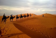 Plan a Morning Safari in Dubai Image
